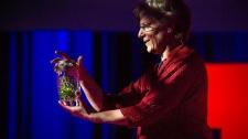 TED Talks Tình Yêu Và Sự Dối Lừa Của Đom Đóm - Sara Lewis Công Nghệ Sinh Học - Y Tế - Sức Khỏe