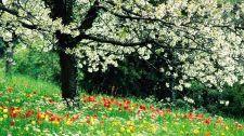 Loving Way Kỳ Số 21 - Thì Thầm Mùa Xuân Loving Way