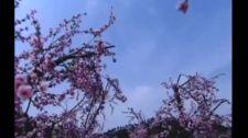 Thiên Ngoại Phi Tiên - Tập 26 Thiên Ngoại Phi Tiên - Lồng Tiếng