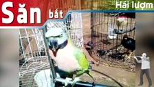 Thường Vĩ Vật Nuôi Trong Nhà | Thú Cưng| Chim Cảnh - Kỷ Niệm Pet Video Bựa Của Bác Nông Dân