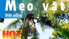 Thường Vĩ Cách Hái Dừa, Dụng Cụ Cần Thiết Để Hái Dừa Mẹo Vặt Đời Sống