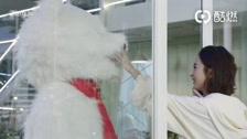 Thời Gian Tươi Đẹp Của Anh Và Em Boss Lệ biến hình thành gấu Bắc Cực dỗ ngọt bà xã Highlight, Hậu trường