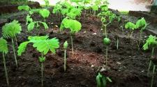 TED Talks Làm Sao Để Trồng Rừng Ở Sân Sau Nhà Bạn - Shubhendu Sharma Công Nghệ Sinh Học - Y Tế - Sức Khỏe